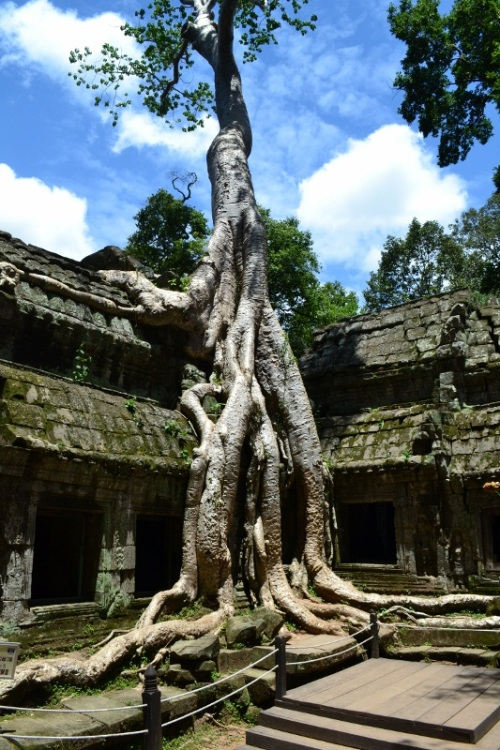 Amy's Pick - Ta Prohm Temple - Angkor Wat, Cambodia